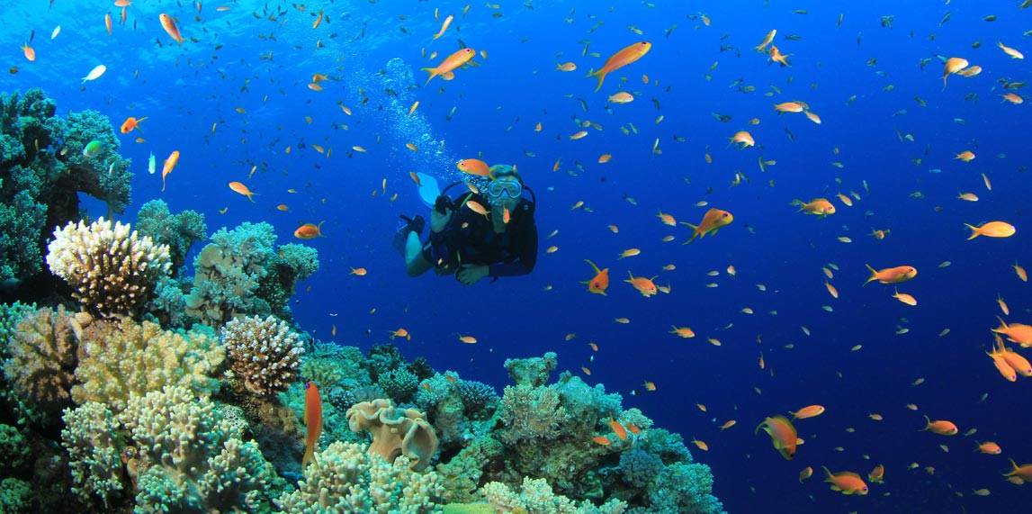 mauritius scuba diving ile ilgili görsel sonucu