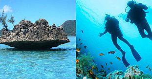 Safari Diving Trip & Visit To Benitier Island - Exclusive