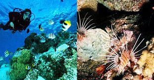 Private Safari Diving Trip - 2 Dives - Exclusive