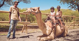 Camel Ride Activities at Casela