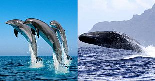 Exclusive-Private Swim With Dolphins & Whale Watching