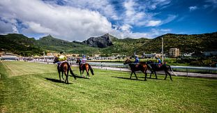 Vip Horse Racing - Full Day