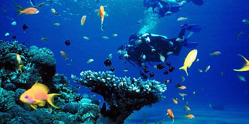 Diving Packages - Grand Bay (North Coast)