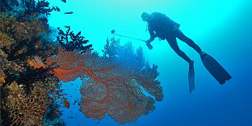 Padi Open Water Diver Course - Pereybere (North Coast) - Mauritius