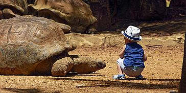 Themed Adventure Packages at Crocodile & Giant Tortoises Park