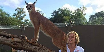 Interaction with Caracals