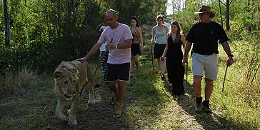 Walking with lions Mauritius