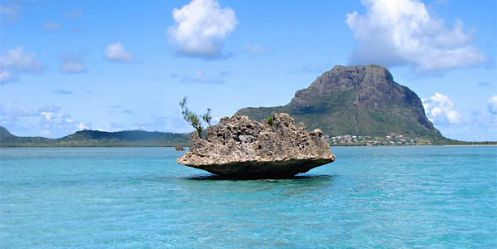 Catamaran Cruise - See Dolphins + Visit Benitiers Island + Lunch - Mauritius Attractions