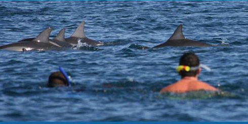 Swim with dolphins 2 5 hours mauritius attractions - Dauphin public swimming pool hours ...