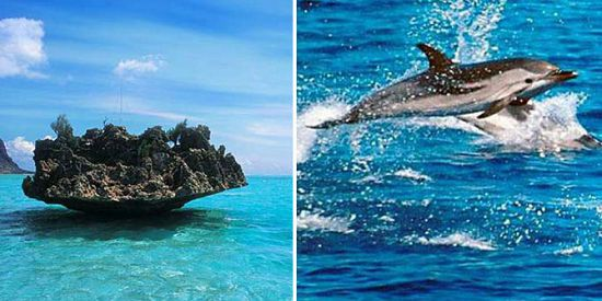 Swim With Dolphins + Visit Benitiers Island + Lunch