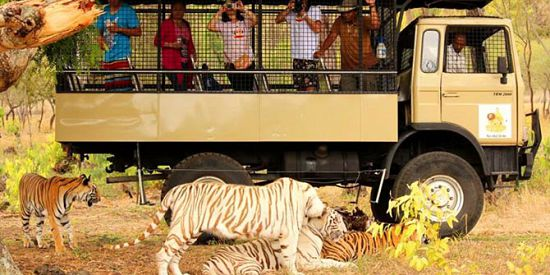 Big Cats Drive Thru in Mauritius (Casela Park)