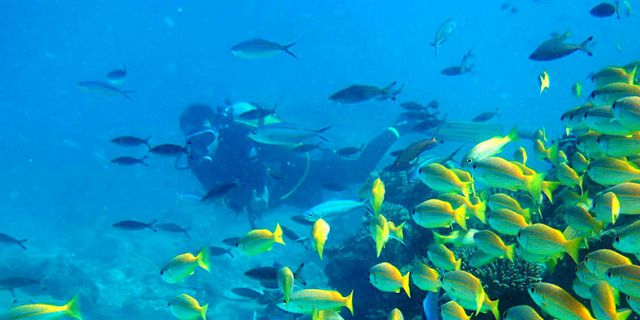 PADI Discovery Initiation diving in mauritius (11)