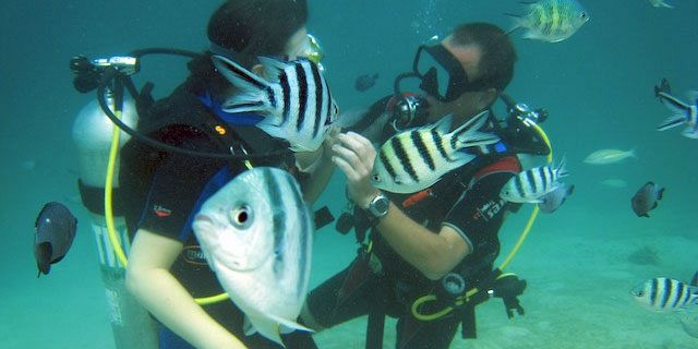 PADI Discovery Initiation diving in mauritius (14)