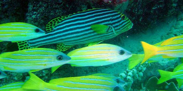 Diving in grand bay mauritius Forfaits de plongee maurice (11)