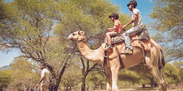 Camel ride activities  (1)