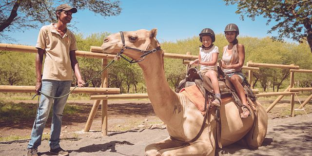 Camel ride activities  (4)