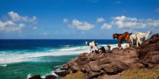 Full day sightseeing adventure excursion in rodrigues (9)