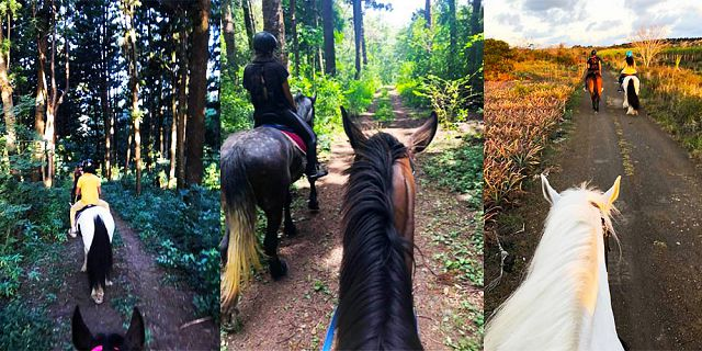 Horse ride in the north of mauritius (3)