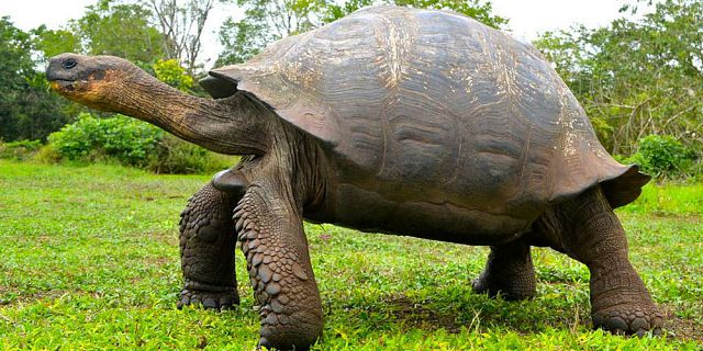 Themed adventure packages at crocodile giant tortoises park  (5)