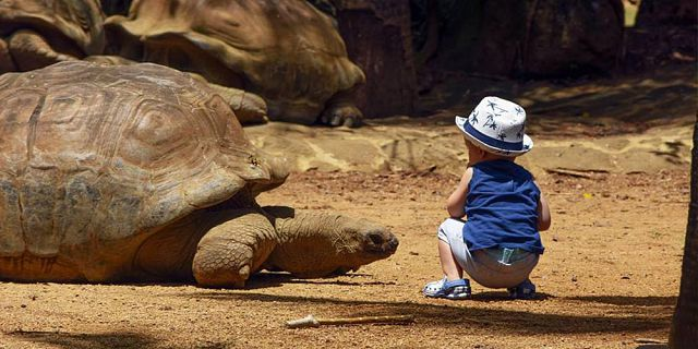Themed adventure packages at crocodile giant tortoises park  (8)