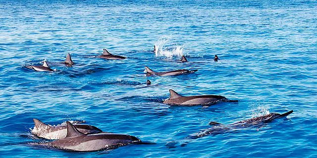 Catamaran west coast dolphins cruise mauritius (4)