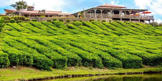 Bois cheri tea factory (1)
