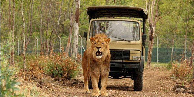 Safari adventures package (03)