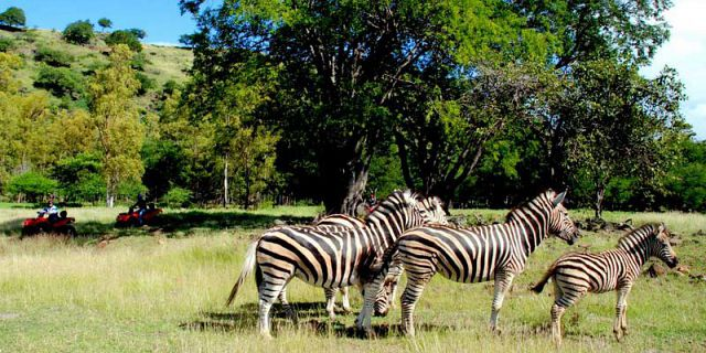 Safari adventures package (19)