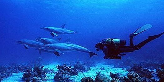 8 dolphin dives in mauritius