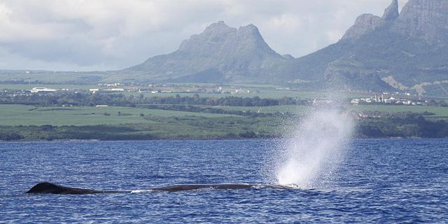 Mauritius big game fishing (31)