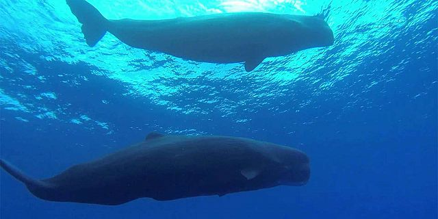 Whale watching mauritius