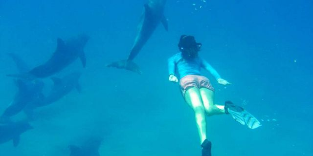 Snorkeling dolphins black river mauritius