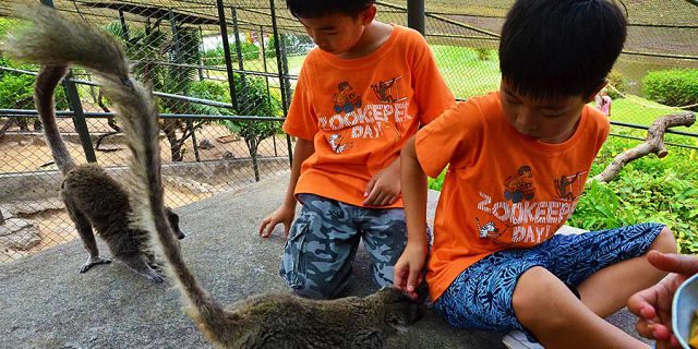Zookeeper for a day kids package at casela park (8)