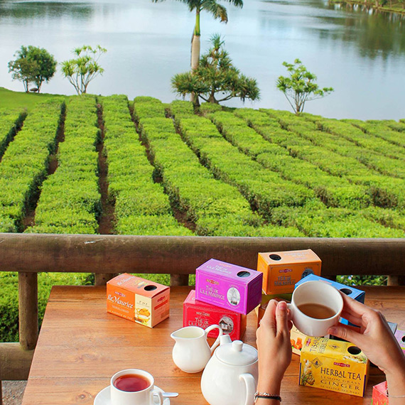 A Journey Back in Time with the Mauritius Tea Route
