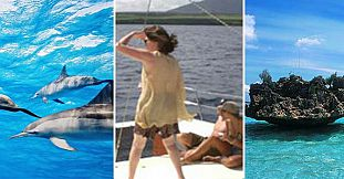 Catamaran Cruise - See Dolphins + Visit Benitiers Island