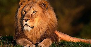Safari Adventures Day - 1 Day Package