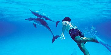 Swim with Dolphins: 2.5-hour Budget Trip