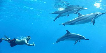 Exclusive Day Package - Swimming with Dolphins, Lunch & Quad