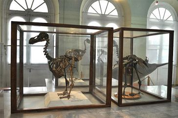 Image result for national history museum port louis