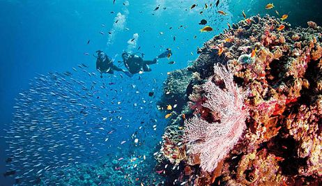 Diving In Mauritius Mauritius Diving Trips And Diving Packages