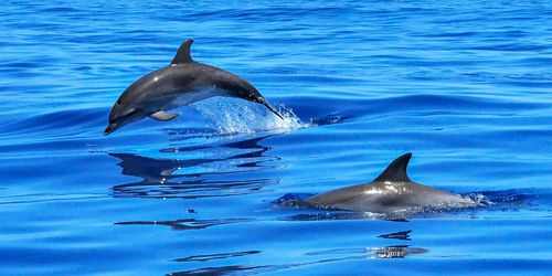 2-hour Swim with Dolphins Budget Trip