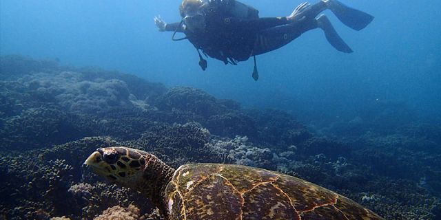 Try scuba diving package (1)