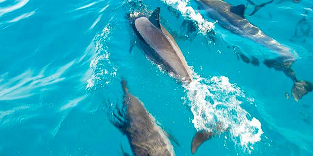 Exclusive half day catamaran cruise dolphins encounter snorkelling (8)