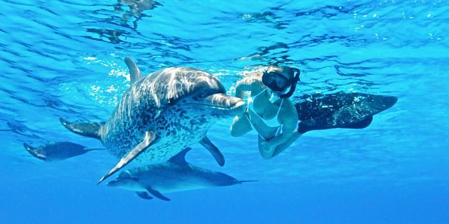 Swim with dolphin 2 5 hour budget trip (3)
