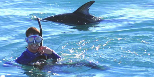 Swimming with dolphins mauritius (4)