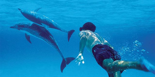 Swimming with dolphins mauritius (5)
