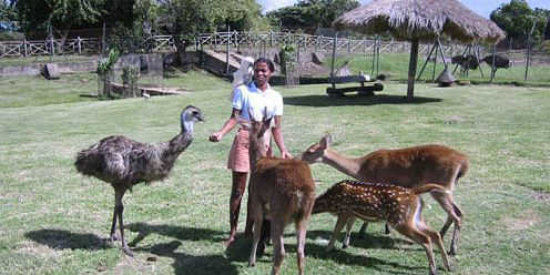 23 mauritius attractions wildlife