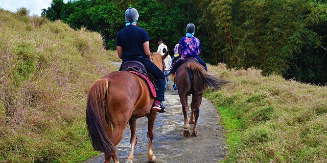 Horse riding excursion and quad biking (4)