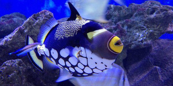 Mauritius Aquarium Mauritius Attractions