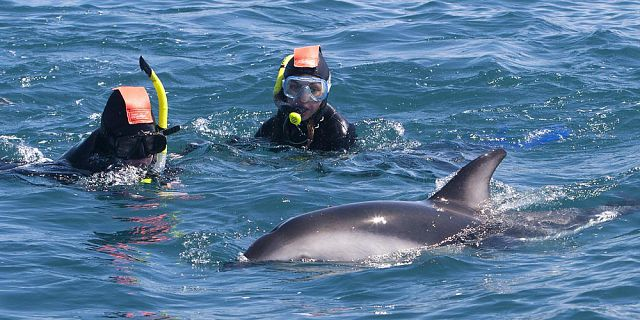 Exclusive day package swimming with dolphins lunch quad (1)